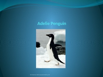 Adelie Penguin - Power Point - Information Facts Pictures