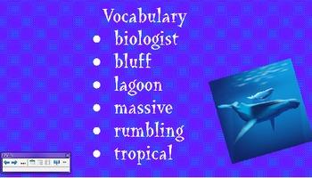 Adelina's Whales Vocabulary Presentation