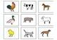 Adivina el Animal- Guess the Animal