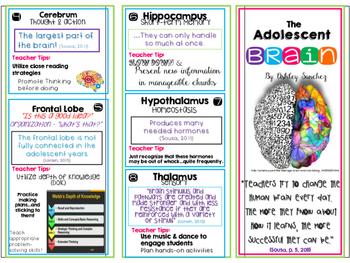 Adolescent Brain Brochure ~Professional/Staff Development Hand-out