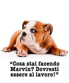 Cagnolini Adorabili: I Bulldog (Italian Edition)