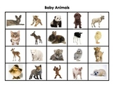 Adult Animals and Their Babies Matching