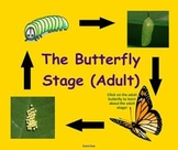 Adult Butterfly SmartBoard Lesson {Life Cycle of a Butterfly}