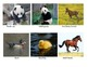 Adorable adult and baby animal sort, match and memory game!