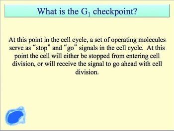 Advanced Placement (AP) Biology Review PPT: Mitosis and the Cell Cycle