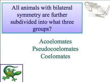 Advanced Placement (AP) Biology Review Powerpoint: Intro to Animals