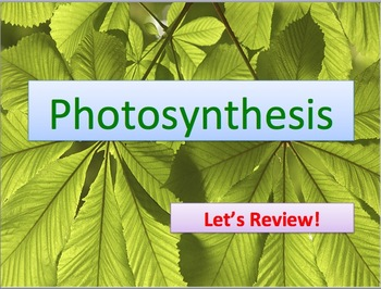 biology review of photosynthesis Prentice hall biology chapter 8: photosynthesis chapter exam instructions choose your answers to the questions and click 'next' to see the next set of questions.