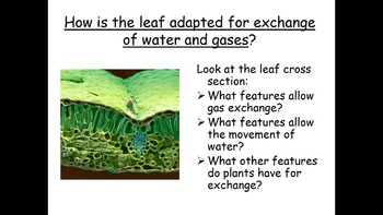 AP Biology Teaching and Review - 62 powerpoints to cover 2 years of teaching