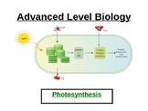 Advanced level photosynthesis