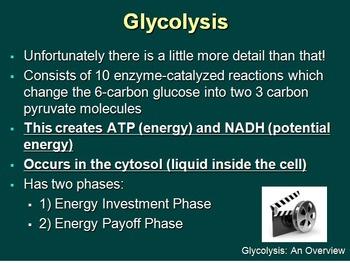 Cellular Respiration - Aerobic - Senior Biology PowerPoint Lesson