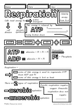 Aerobic and Anaerobic Respiration Biology Doodle Notes, Middle, High School