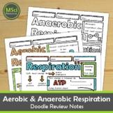 Aerobic Anaerobic Respiration Biology Doodle Sheet Guided