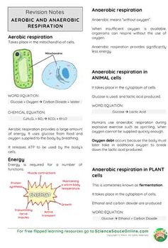 Aerobic and Anaerobic Respiration - Handout and practice questions