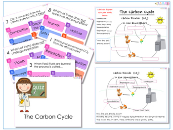 AfL Quiz and Worksheet - The Carbon Cycle