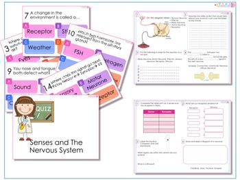AfL Quiz and Worksheet - The Nervous System