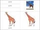 Africa: Parts of a Giraffe