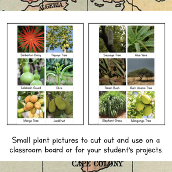 Africa Unit Study- Plants of Africa Information Cards
