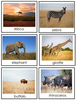 African Animals Cards