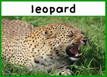 African Animal Safari Photo Set 24 Photos