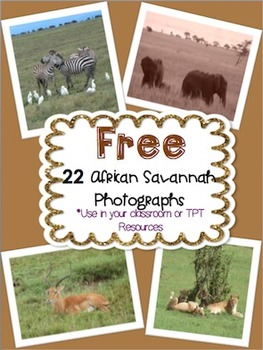 African Animal Photographs - FREE