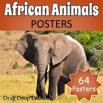 African Animals Posters