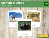 African Animals: 3-Part Cards