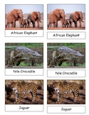 African Animals 3 Part Cards