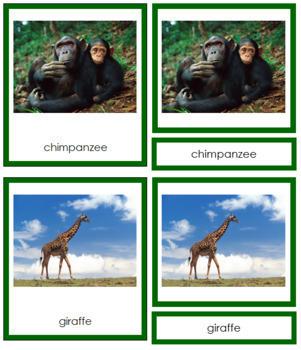 African Animals: 3-Part Cards (color borders) - Montessori