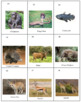 African Animals Concentration