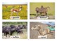 African Animals Flashcards with Vocabulary