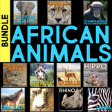 African Animals: Informational Article, QR Code Research Page & Fact Sort BUNDLE