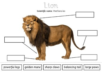 African Animals Labelling Task