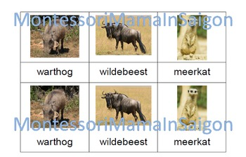 African Animals Montessori Three Part Vocabulary Cards