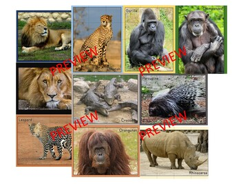 African Animal Photo Puzzles