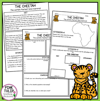 African Animals - Reading Comprehension Pack