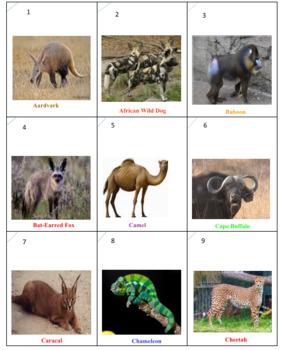 African Animals Rummy
