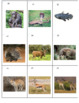 African Animals Sort Game
