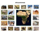 Animals of Africa :Montessori Three Part Cards