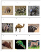 African Animals Tic Tac Know