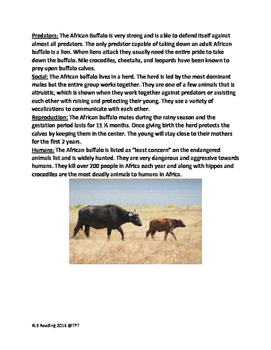 African Buffalo - informational article lesson facts questions vocab