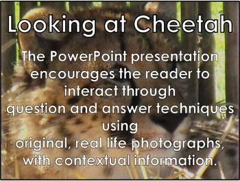 African Cats: Cheetah - PDF presentation