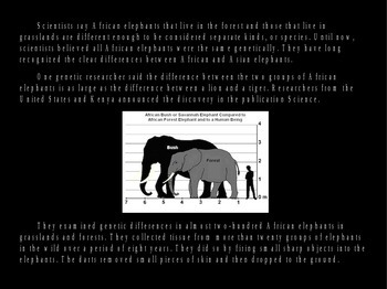 African Elephants PowerPoint Presentation