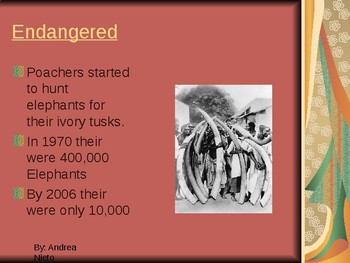 African Elephants Endangered