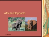 African Elephants Endangered