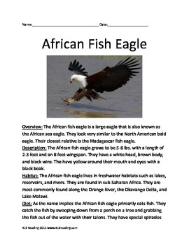 African Fish Eagle Bird - Informational Article Questions Vocabulary Facts