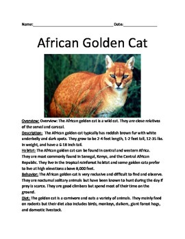 African Golden Cat - Review Article Facts Information Review Questions vocab