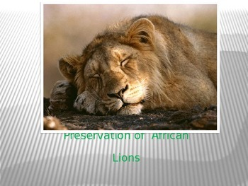 African Lion Learning Journey