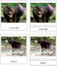 African Rainforest Animals: 3-Part Cards