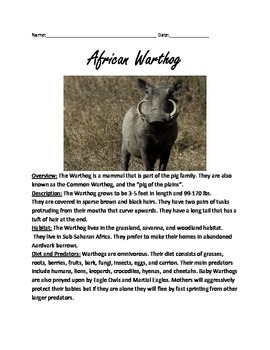 African Warthog Review Article Lesson Facts Information Questions Vocabulary