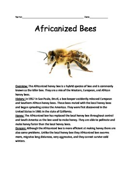Africanized Bees - Killer Bees Review Article Facts Swarms Questions Vocabulary